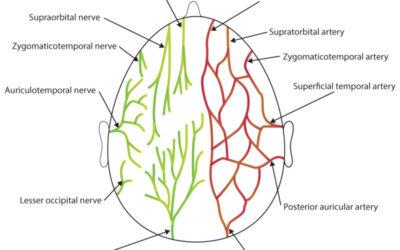 Patient Survey on Occipital Neuralgia